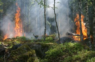 2. Fire