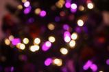 Celebrate the Holidays at San JoseParks